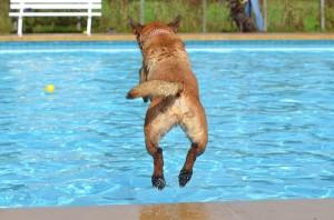 Planschbecken für Hunde